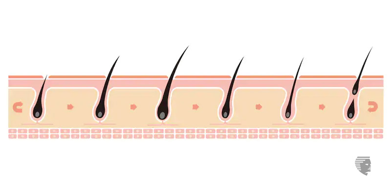 What Is the Normal Hair Growth Cycle?