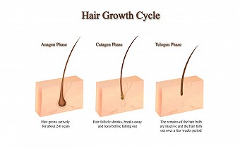 8-tips-to-make-your-hair-follicles-stronger
